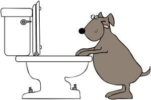diary of a toilet seat